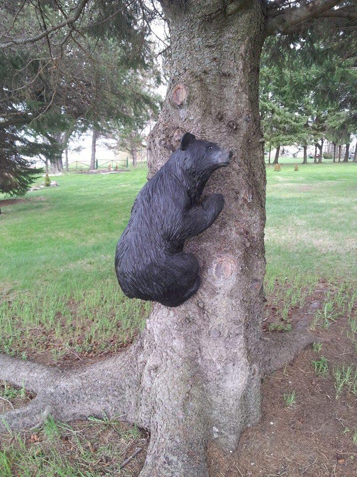 Tree climbing bear - May 2015
